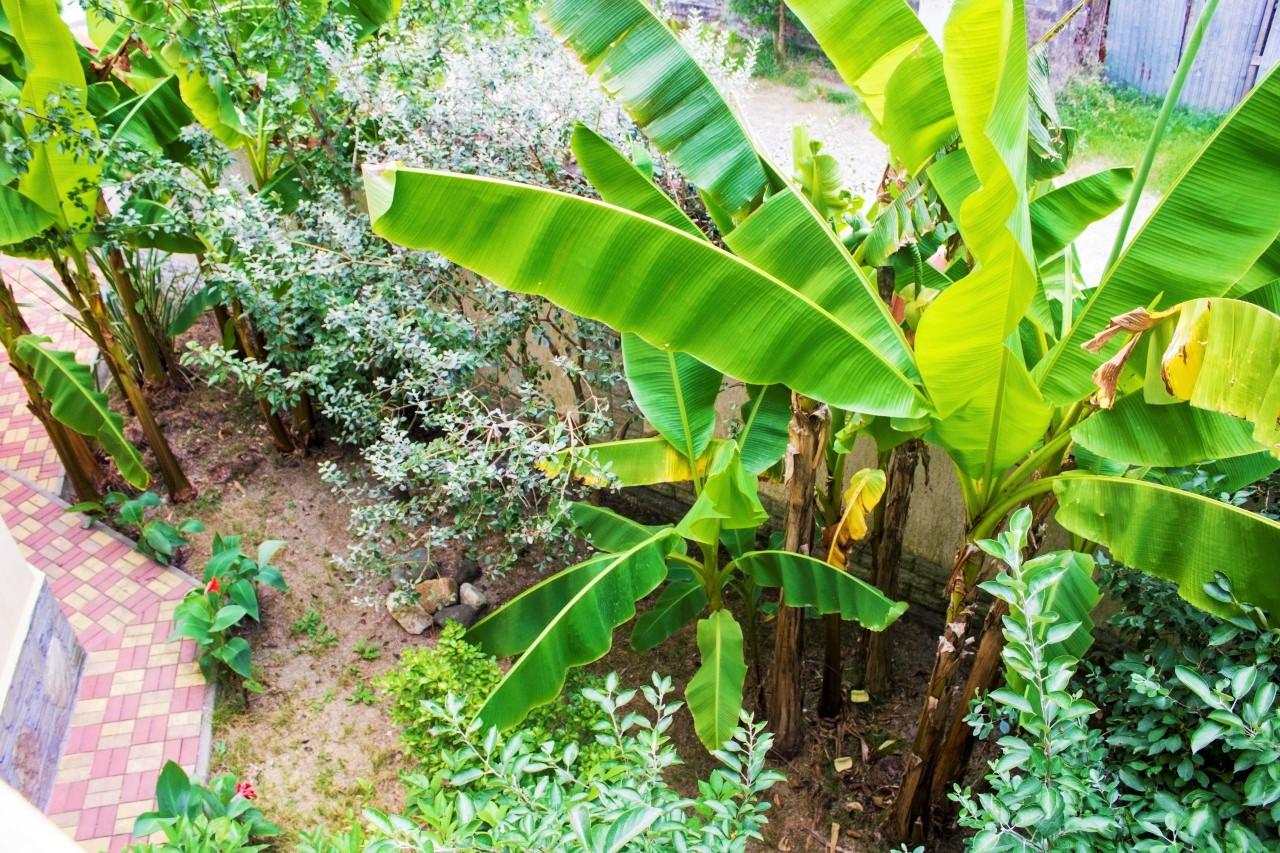 Во дворе много зелени