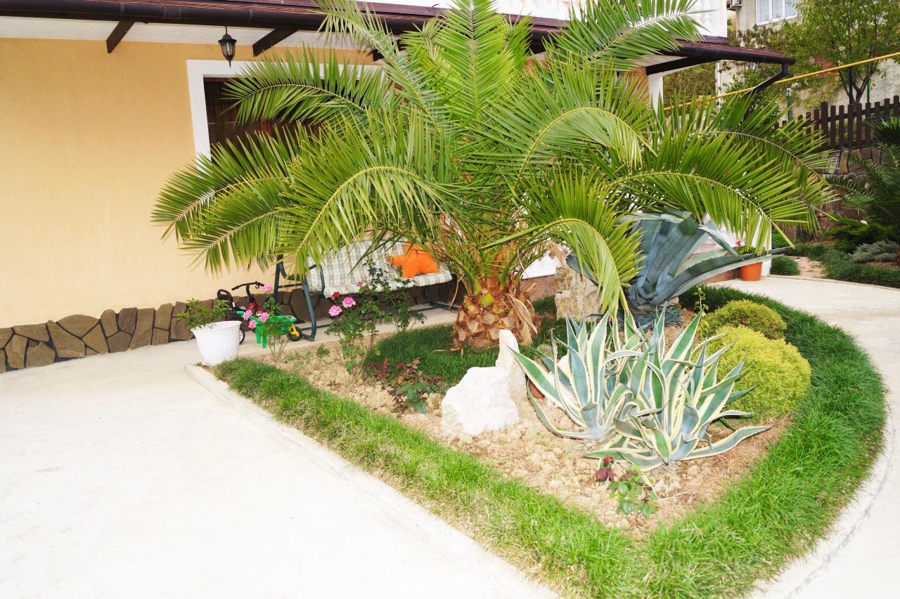На территории дома растения