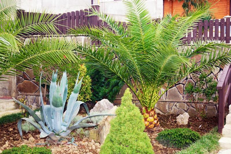 Большое наличие растений