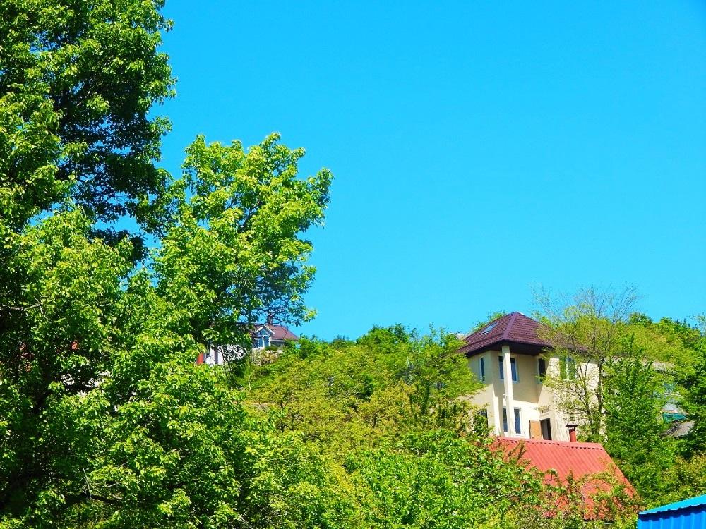 Вид на зелень