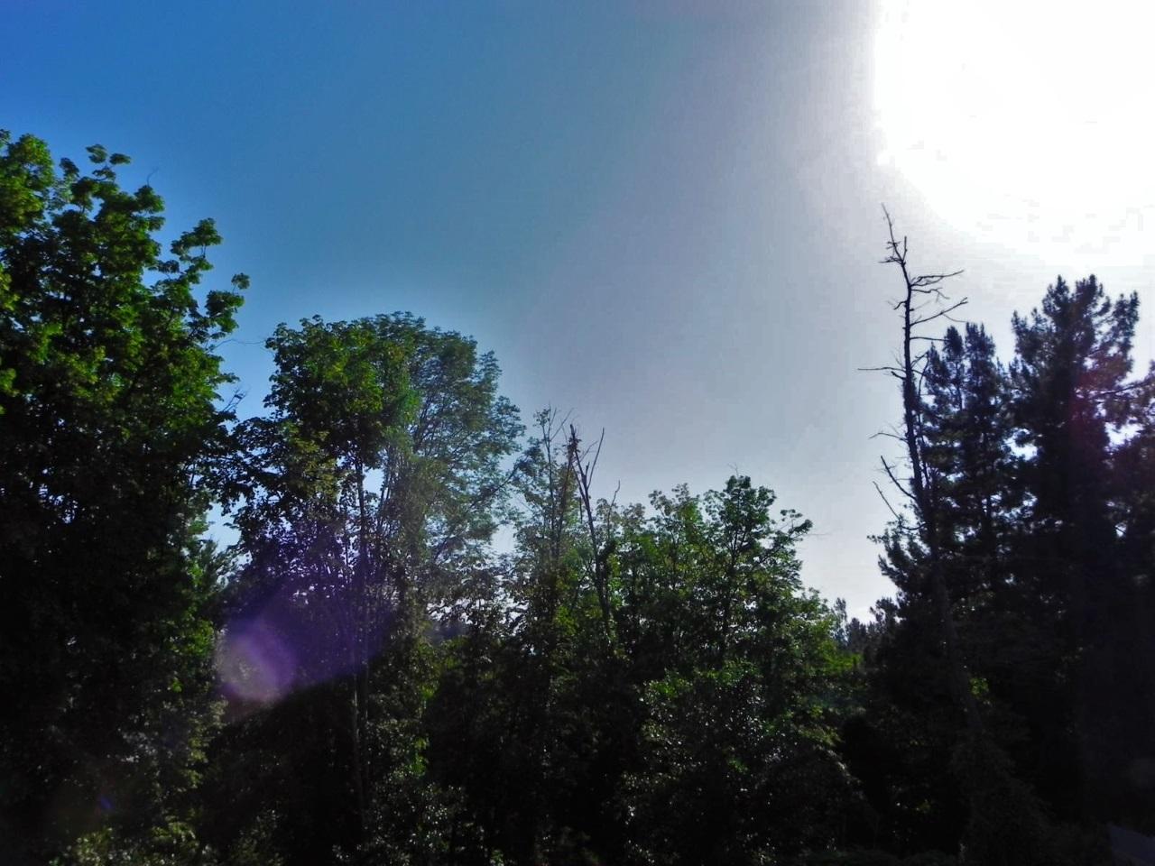 Вид с балкона на деревья