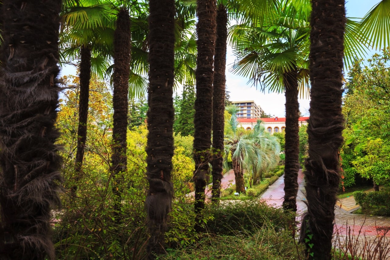 На территории растут пальмы