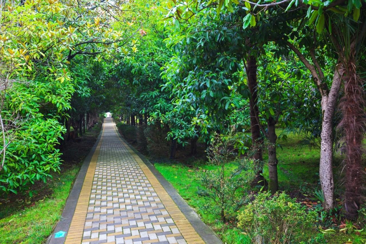 Зеленная алея