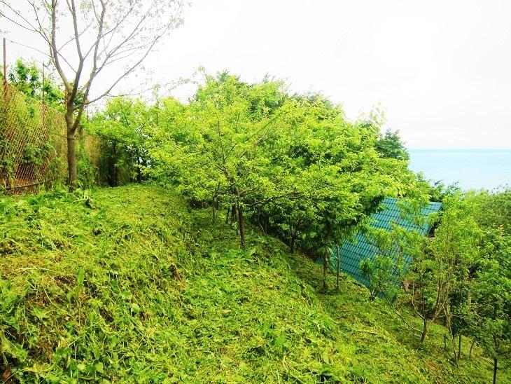 Зеленый участок