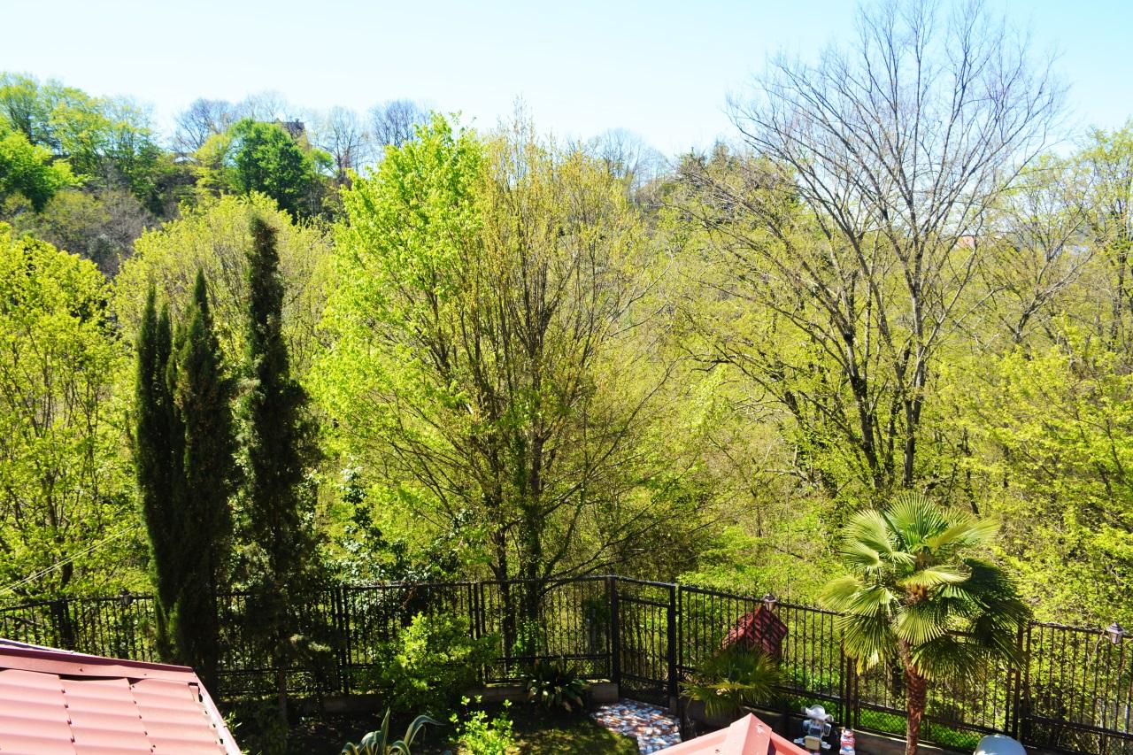 Участок окружен деревьями